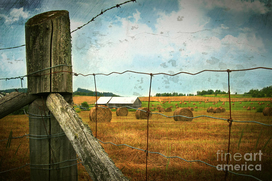 Agricultural Photograph - Field Of Freshly Cut Bales Of Hay by Sandra Cunningham