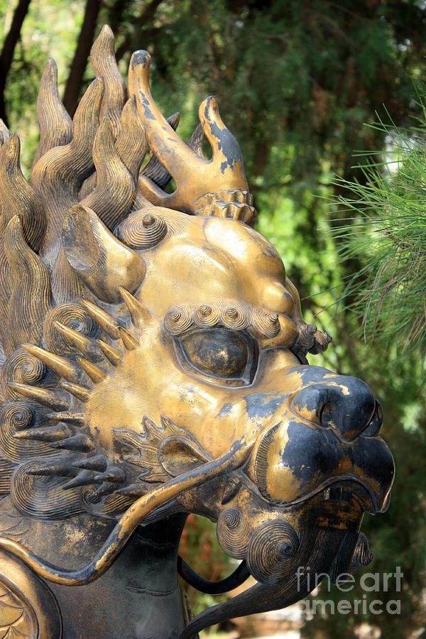 Foo dog face