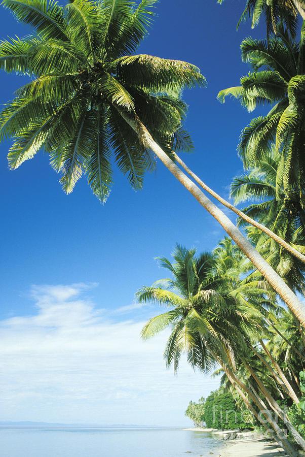 Fiji, Vanua Levu Photograph