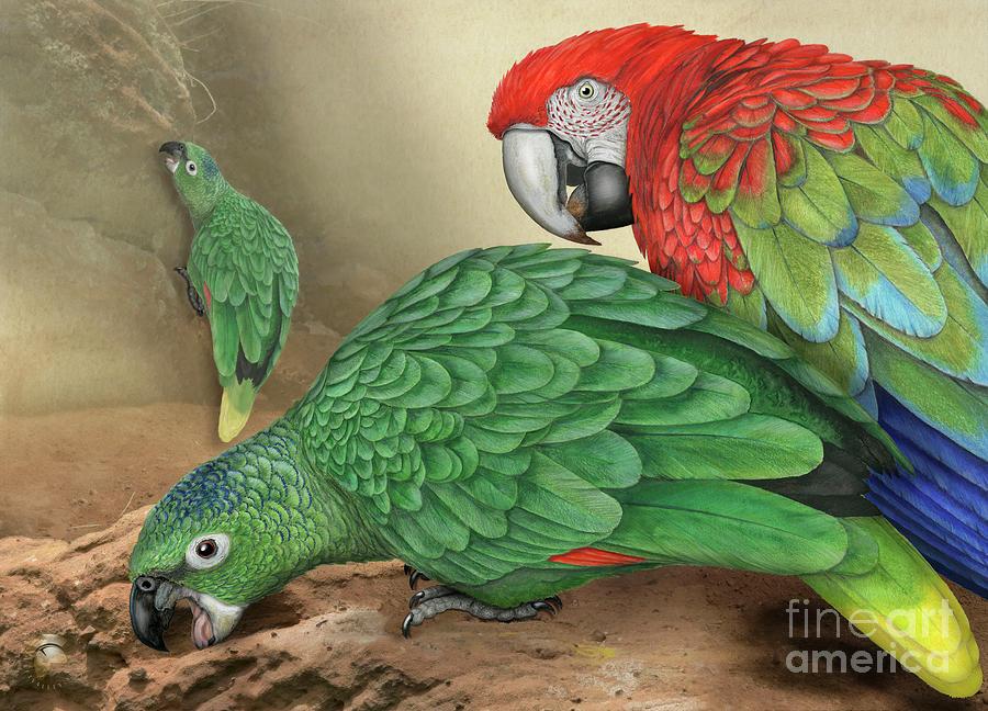 Mealy Amazon Parrot-amazona Farinosa-harinosa Surena-green-winged Macaw-ara Chloroptera-guacamayo Painting