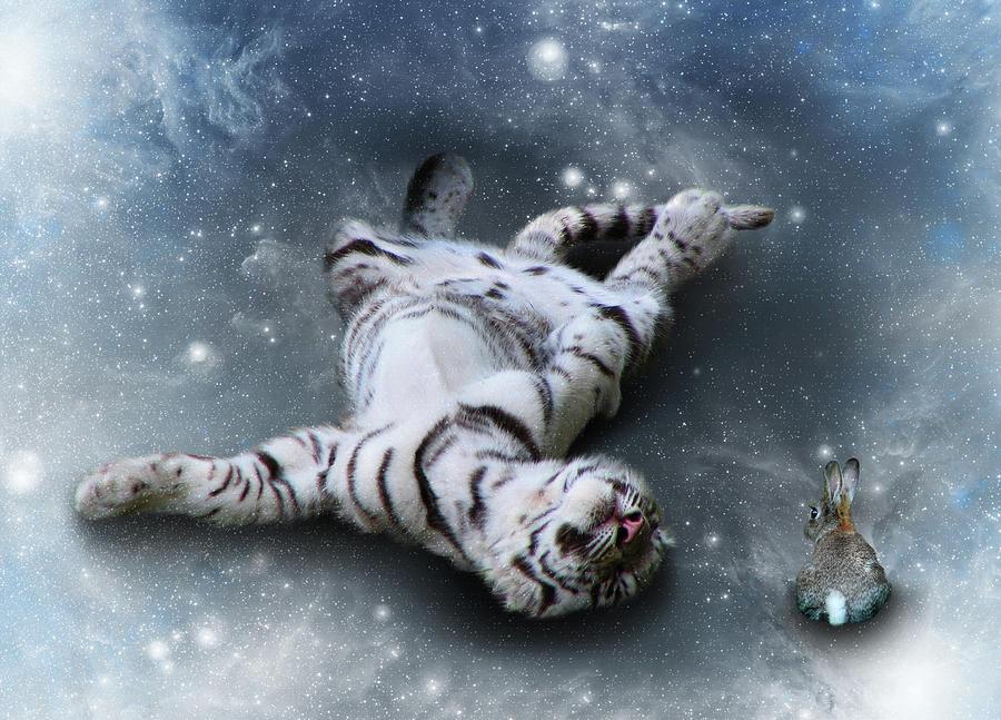 Tiger Photograph - Fiona Floyd And The Freeze by Julie L Hoddinott