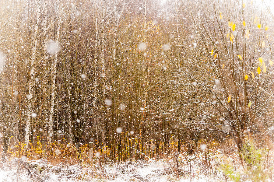 Snow Photograph - First Snow. Snow Flakes I by Jenny Rainbow