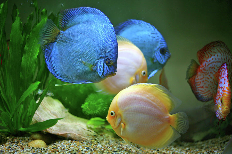 Horizontal Photograph - Fish In Water by Vietnam