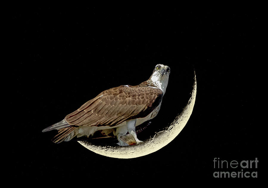 Fishing On The Moon Photograph