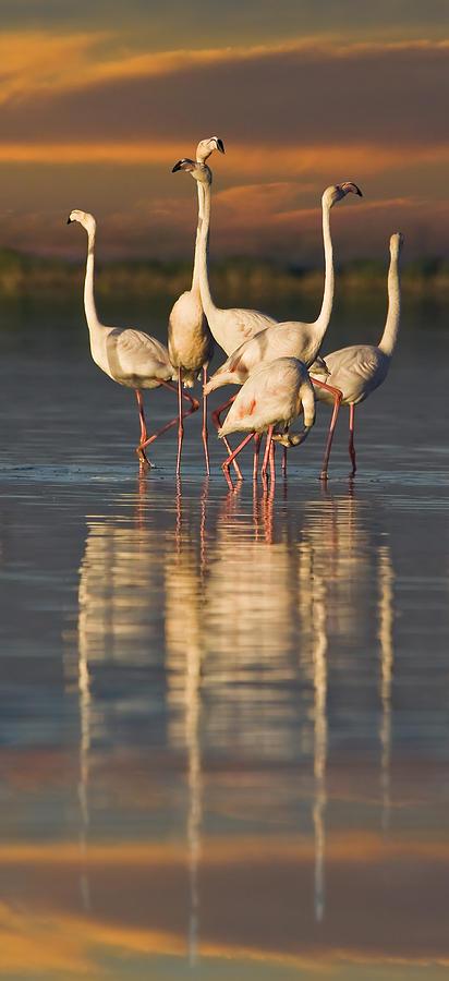 Flamingo Dance Digital Art