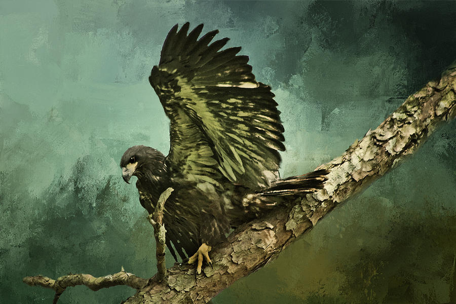 Fledgling Eagle Digital Art