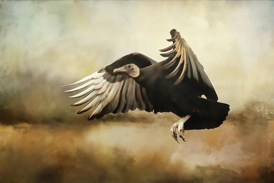 Flight Of The Vulture Digital Art
