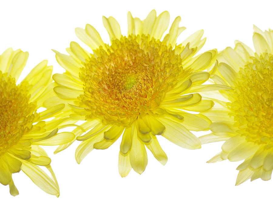 Yellow Photograph - Floaters by Rebecca Cozart