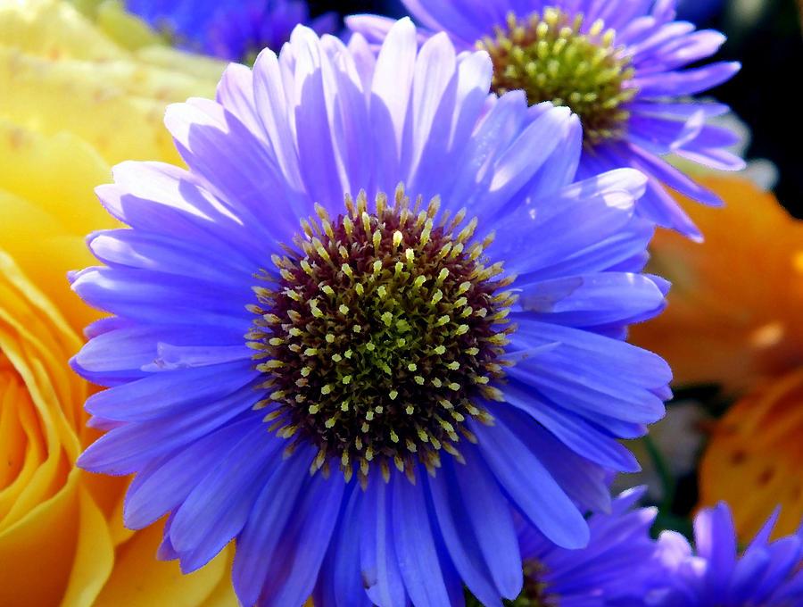 Flowers Photograph - Floral Explosion by Lorainek Photographs