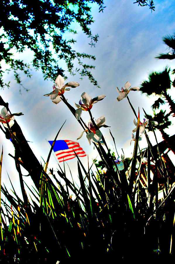 Flag Photograph - Florida Flag by Emily Stauring