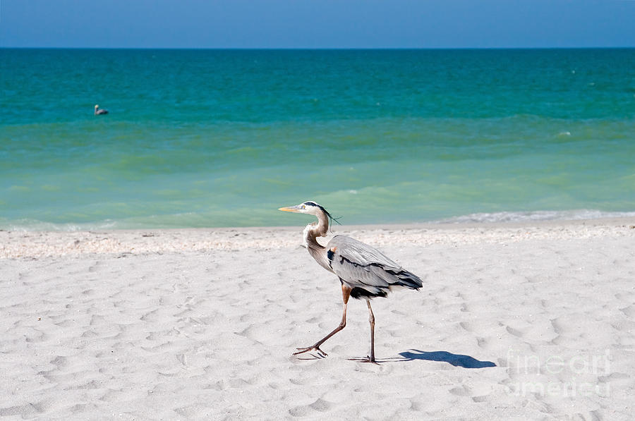 Beach Photograph - Florida Sanibel Island Summer Vacation Beach Wildlife by ELITE IMAGE photography By Chad McDermott