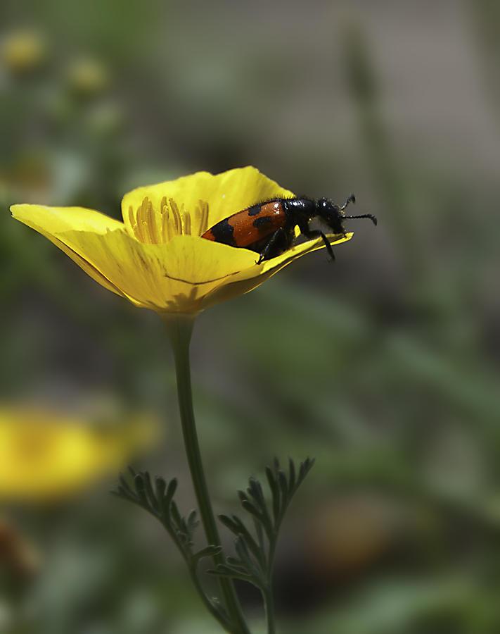 Botanic Photograph - Flower And Bug by Svetlana Sewell