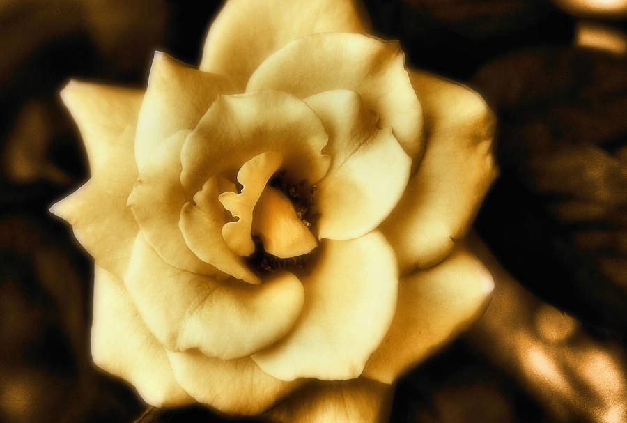 Flower Photograph - Flower by Gulf Island Photography and Images