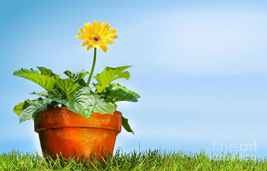 Beautiful Digital Art - Flower Pot On The Grass by Sandra Cunningham