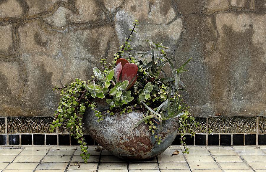 Flower Pot Photograph - Flower Pot by Viktor Savchenko