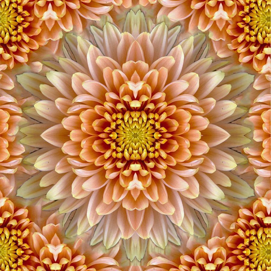 Floral Photograph - Flower Power by Sumit Mehndiratta