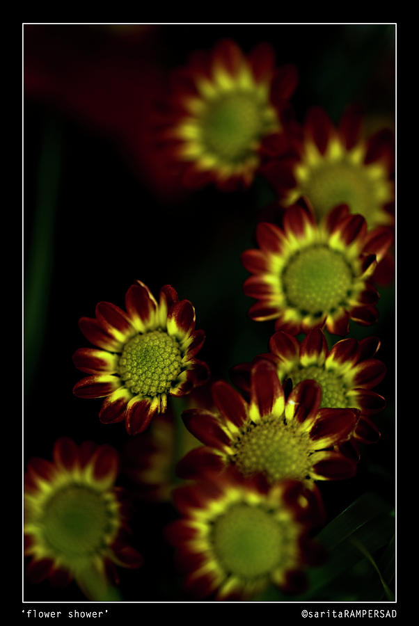 Flower Photograph - Flower Shower by Sarita Rampersad