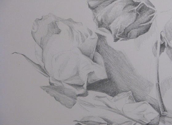 Drawing - Flower Study 1 by Julie Orsini Shakher