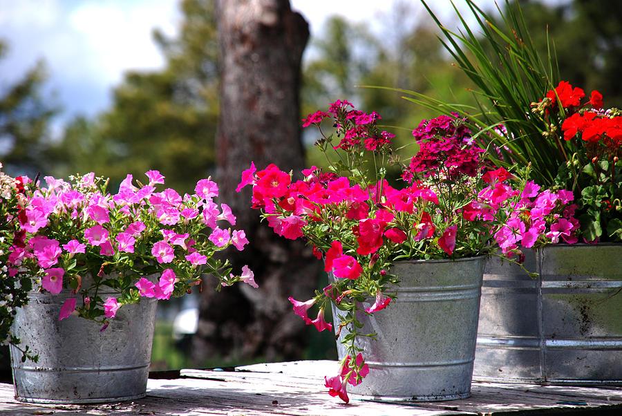 Flower Wagon Photograph - Flower Wagon by Susanne Van Hulst