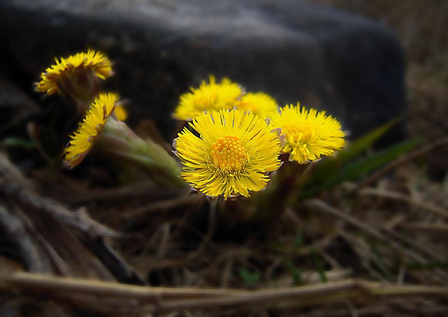 Arrangement Photograph - Flower Weed by Svetlana Sewell