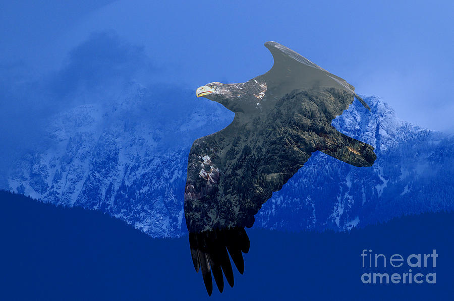 Bald Eagle Photograph - Fly Wild Fly Free by Sharon Talson