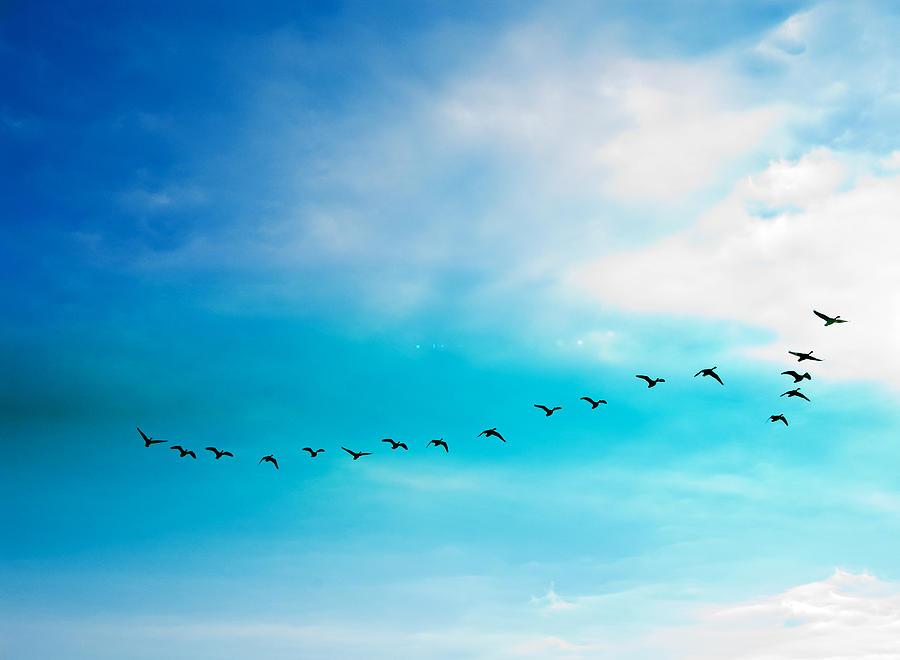 Flying Away Photograph