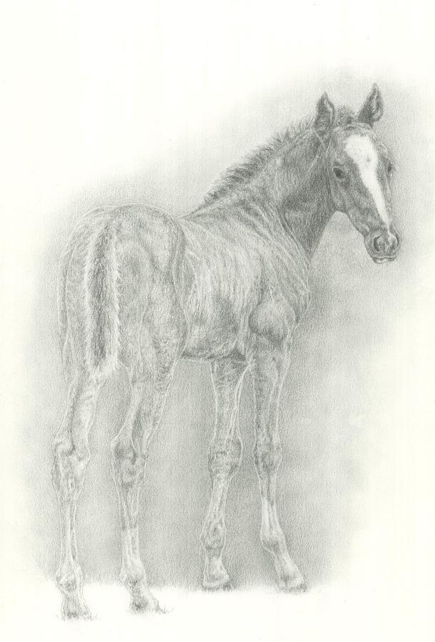 Foal Drawing - Foal by Jennifer Nilsson