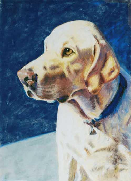 Yellow Lab Painting - Focused by Billie Colson