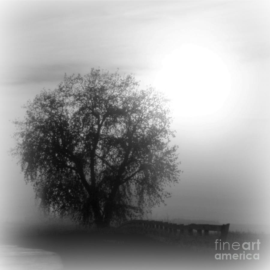 Fog Photograph - Fog Tree by Barbara Henry