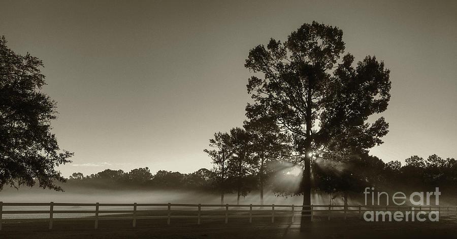 Foggy Light Beams Photograph