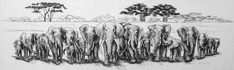 Elephants Drawing - Following The Matriarch by Ann Beeching
