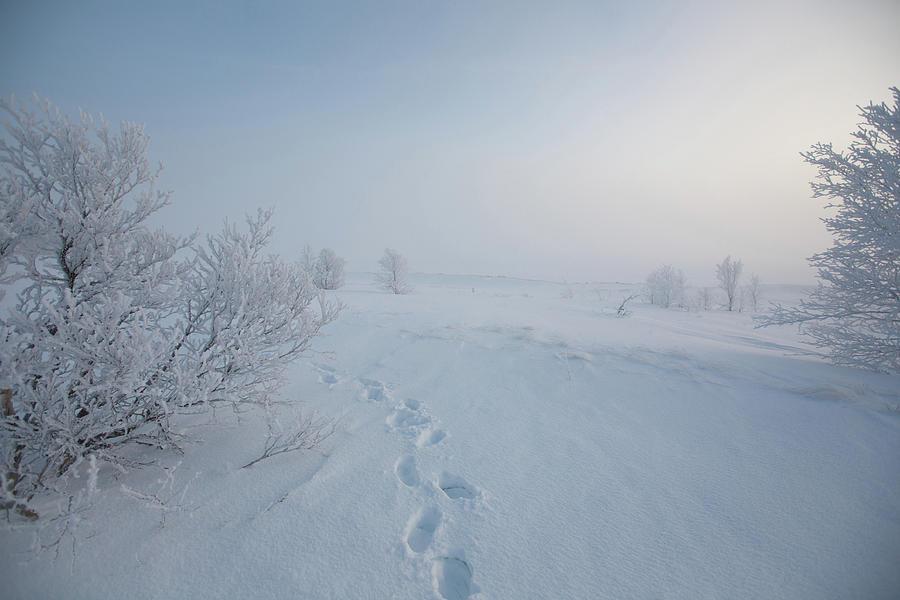 Footprint In Snow Photograph