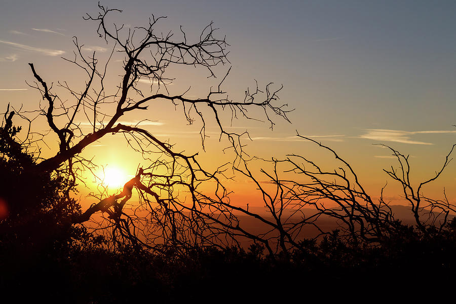 Forest Branches In The Sunset Light Photograph