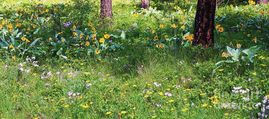 Flowers Photograph - Forest Flowers Landscape by Carol Groenen