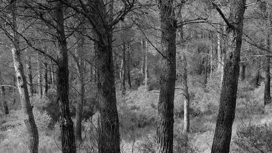 Forest Light Photograph