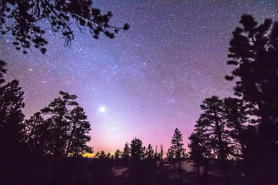 Forest Night Star Delight Photograph