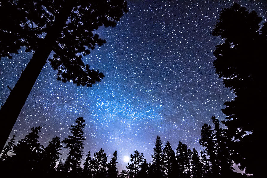 Forest Star Gazing An Astronomy Delight Photograph