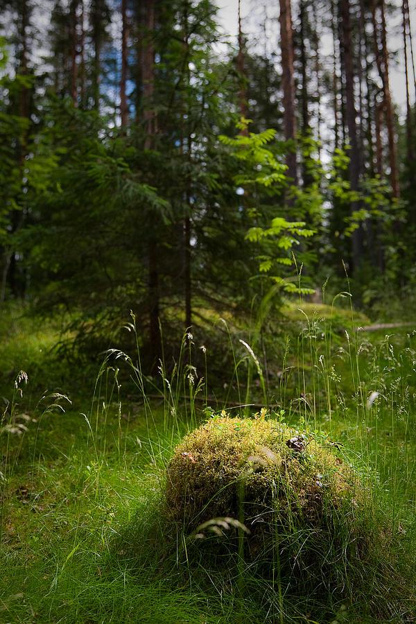 Art Photograph - Forest Tales by Konstantin Dikovsky