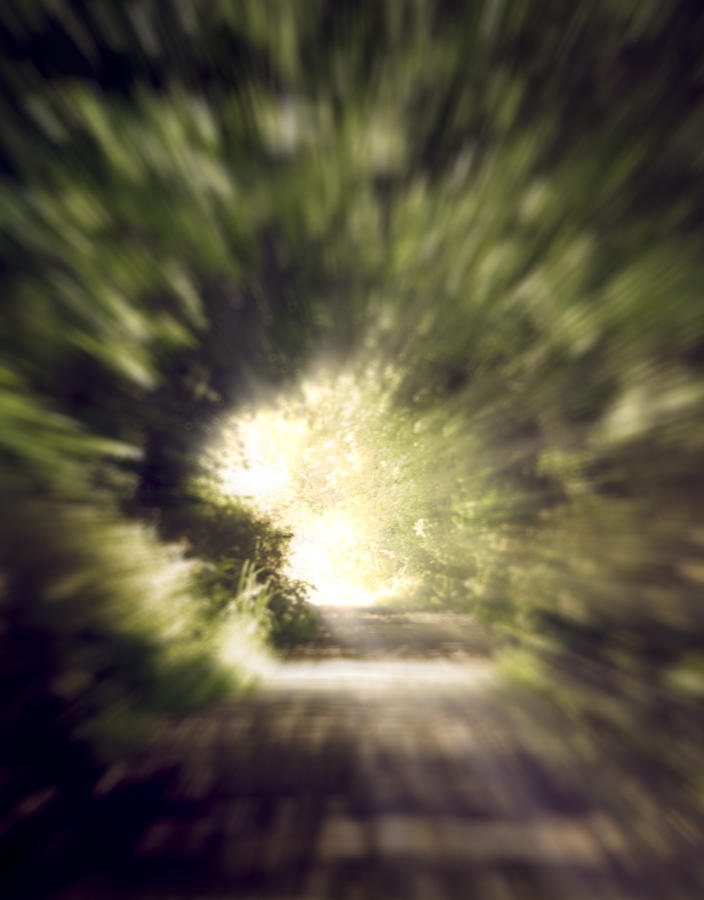 Forest Photograph - Forest Tunnel by Wim Lanclus