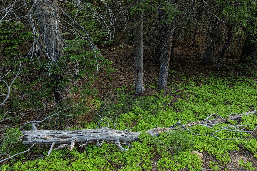 Forest Wilderness Greens Photograph