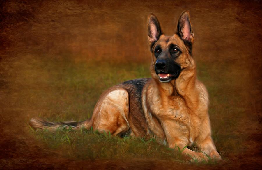 German Shepherd Dog Photograph - Forrest The German Shepherd by Angie Tirado