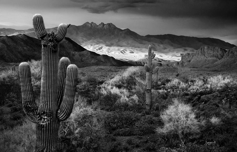 Black And White Photograph - Four Peaks Az Sunset by Dave Dilli