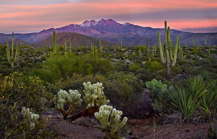 Arizona Photograph - Four Peaks Sunset by Dave Dilli