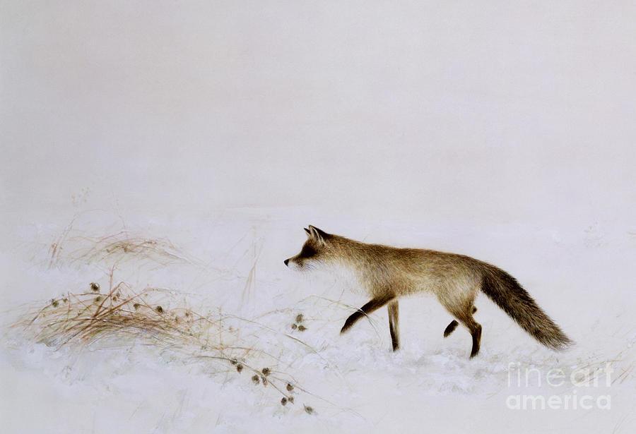 White; Alone; Renard; Neige; Snow; Fox; Animal; Winter; Landscape Painting - Fox In Snow by Jane Neville