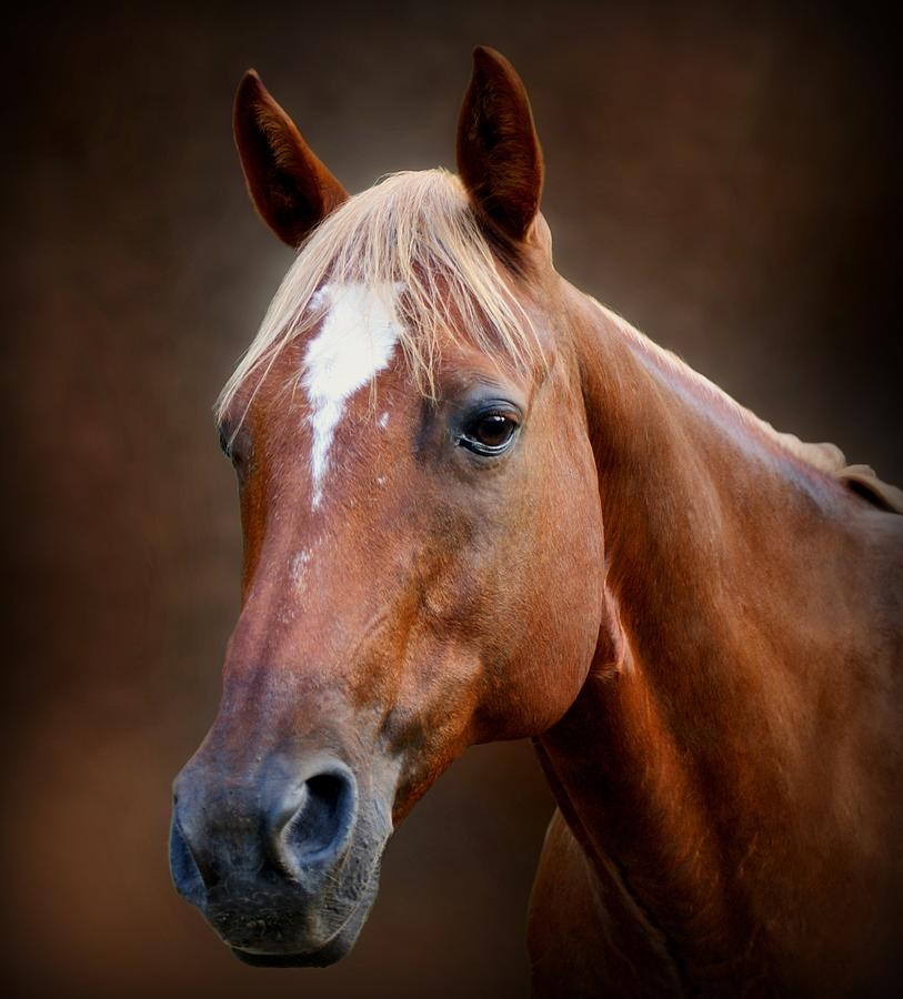 Horse Photograph - Fox - Quarter Horse by Sandy Keeton