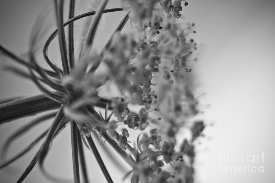 ryankellyphotography@gmail.com Photograph - Fractal Flower Photoset 03 by Ryan Kelly