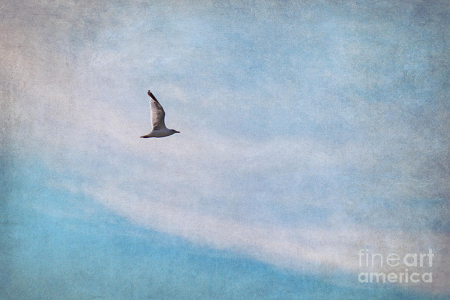 Gull Photograph - Freedom by Angela Doelling AD DESIGN Photo and PhotoArt