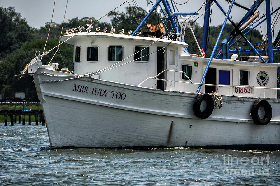 Fresh Local Shrimp Off The Boat Photograph