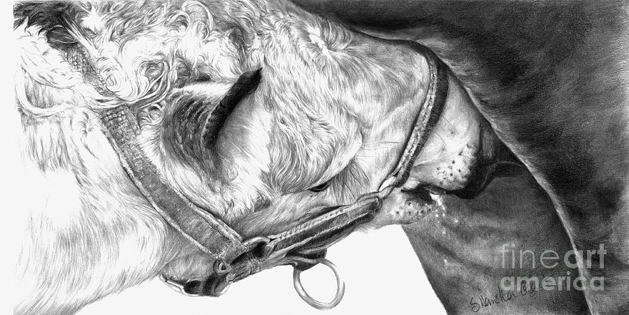 Equine Drawings Drawing - Fresh Milk by Sheona Hamilton-Grant