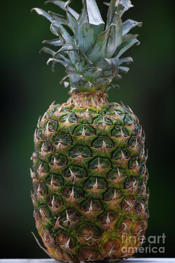Fresh Pineapple Photograph